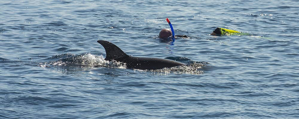 aquatic veterinarian participant snorkeling with dolphin off Mexico shore